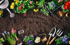 Gardening tips for growing plants in the best gardener's path