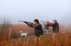 Increasing your Success by Using Hunting Blinds