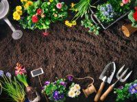 Gardening tips for growing plants in the best gardener's path
