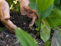 Ways to enrich garden soil